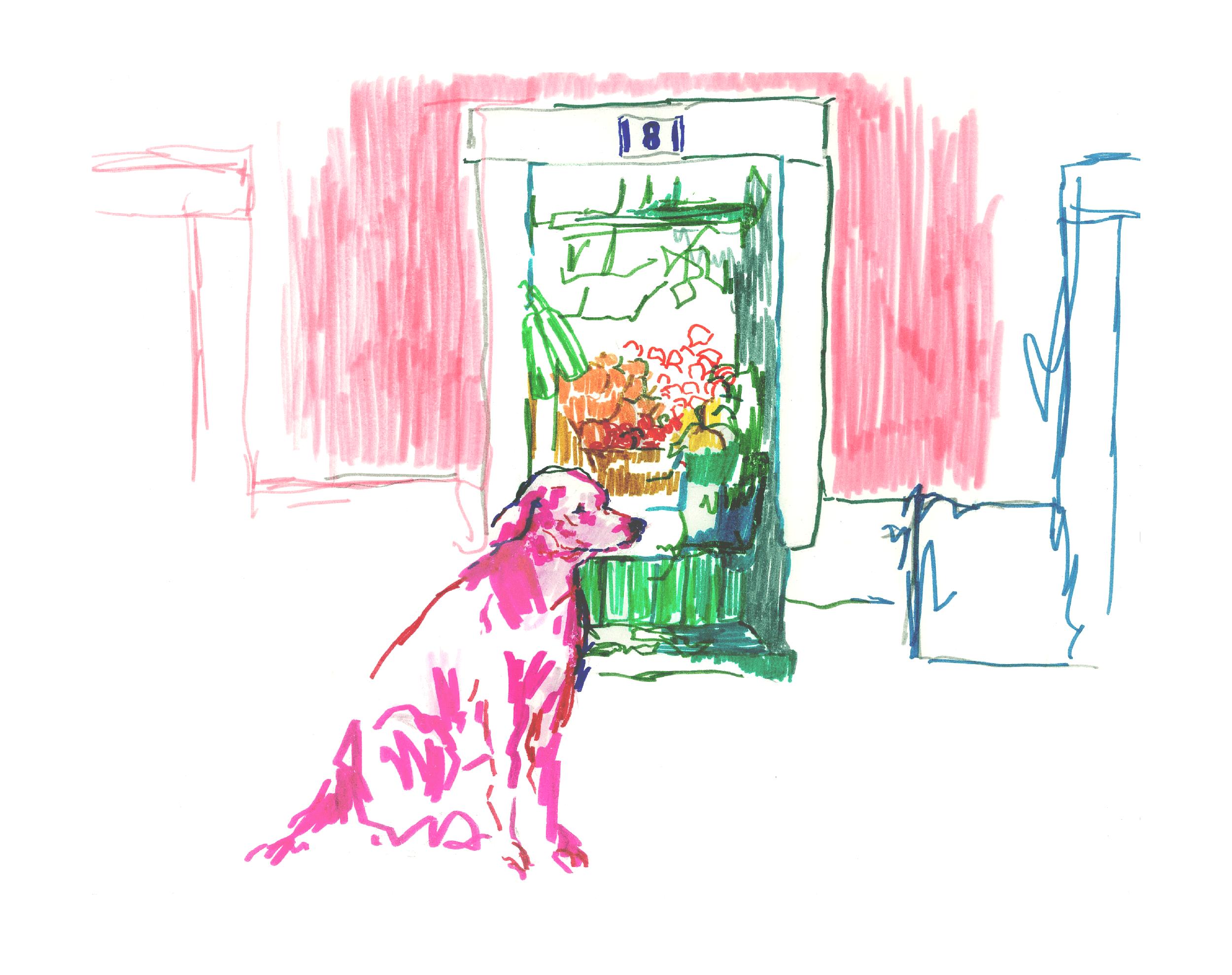 lisbon-dog