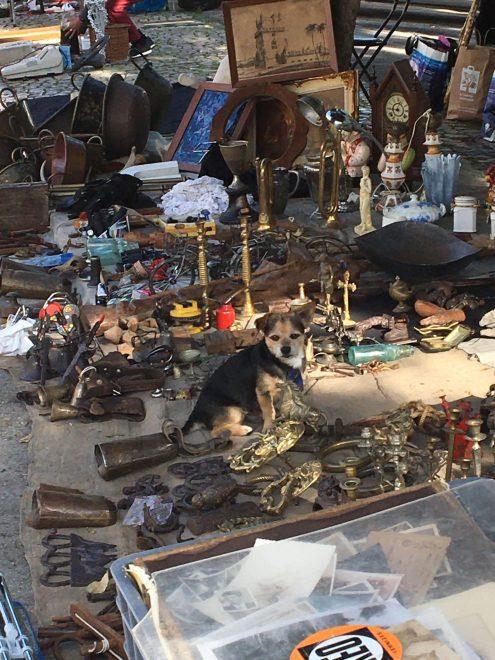 dog-mercado-de-santa-clara